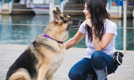 how to make a dog speak